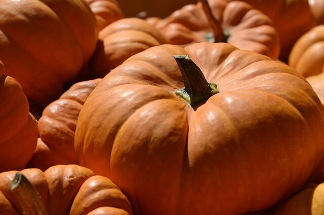 Photo of large orange pumpkins - pumpkin trivia questions and answers | Quizzy Kid