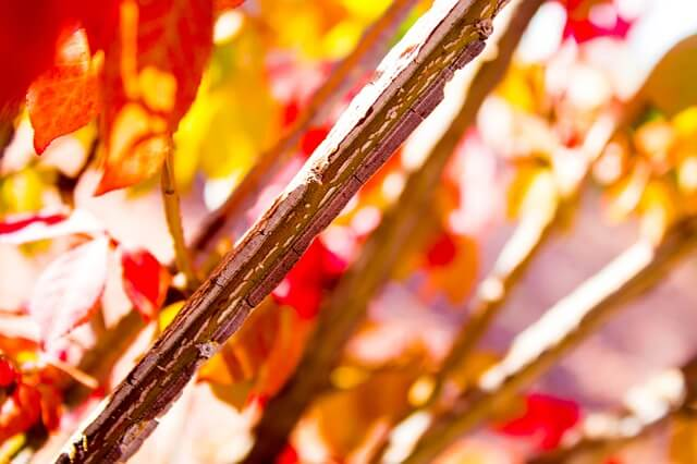 Photo of leaves and fall colors | Thanksgiving trivia questions and answers | Quizzy kid