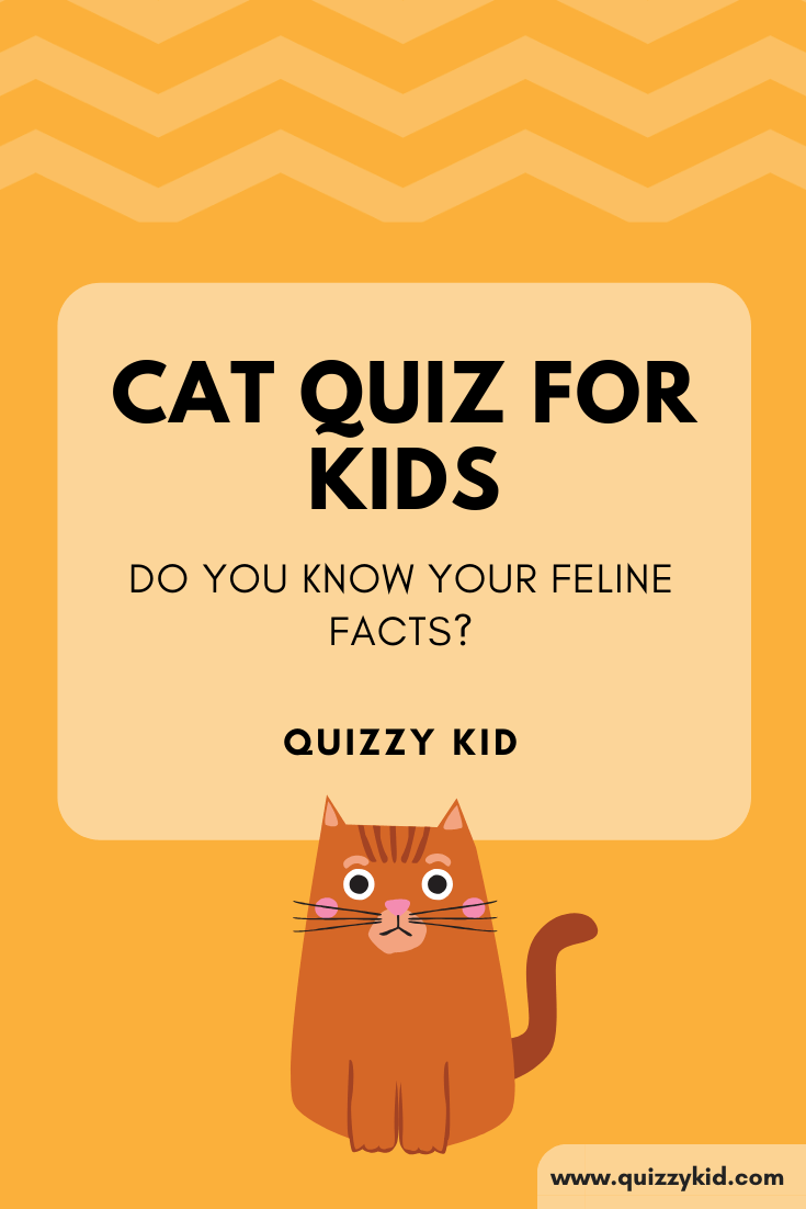 Cat Quiz for kids